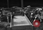 Image of cattle ranch United States USA, 1922, second 14 stock footage video 65675072781