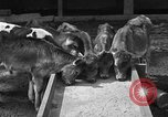 Image of cattle ranch United States USA, 1922, second 16 stock footage video 65675072781