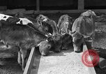 Image of cattle ranch United States USA, 1922, second 17 stock footage video 65675072781