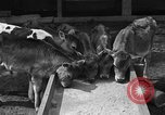 Image of cattle ranch United States USA, 1922, second 19 stock footage video 65675072781
