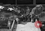 Image of cattle ranch United States USA, 1922, second 20 stock footage video 65675072781