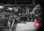 Image of cattle ranch United States USA, 1922, second 21 stock footage video 65675072781