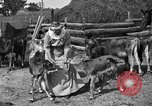 Image of cattle ranch United States USA, 1922, second 35 stock footage video 65675072781