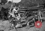 Image of cattle ranch United States USA, 1922, second 36 stock footage video 65675072781