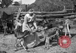 Image of cattle ranch United States USA, 1922, second 37 stock footage video 65675072781
