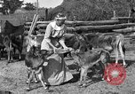 Image of cattle ranch United States USA, 1922, second 38 stock footage video 65675072781