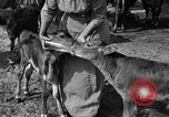 Image of cattle ranch United States USA, 1922, second 40 stock footage video 65675072781