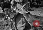 Image of cattle ranch United States USA, 1922, second 43 stock footage video 65675072781