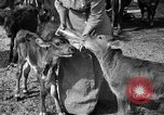 Image of cattle ranch United States USA, 1922, second 44 stock footage video 65675072781