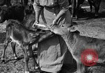 Image of cattle ranch United States USA, 1922, second 45 stock footage video 65675072781
