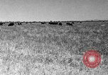 Image of cattle ranch United States USA, 1922, second 42 stock footage video 65675072784