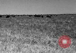 Image of cattle ranch United States USA, 1922, second 43 stock footage video 65675072784