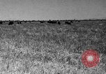 Image of cattle ranch United States USA, 1922, second 44 stock footage video 65675072784