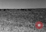 Image of cattle ranch United States USA, 1922, second 46 stock footage video 65675072784