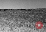 Image of cattle ranch United States USA, 1922, second 47 stock footage video 65675072784
