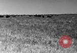 Image of cattle ranch United States USA, 1922, second 48 stock footage video 65675072784