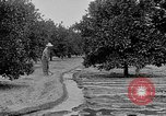 Image of gold panning Leadville Colorado USA, 1922, second 55 stock footage video 65675072890