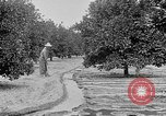 Image of gold panning Leadville Colorado USA, 1922, second 59 stock footage video 65675072890