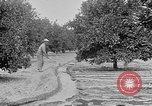 Image of gold panning Leadville Colorado USA, 1922, second 62 stock footage video 65675072890
