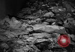 Image of Nazi atrocities in World War 2 Germany, 1945, second 35 stock footage video 65675072907