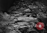 Image of Nazi atrocities in World War 2 Germany, 1945, second 36 stock footage video 65675072907