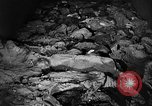 Image of Nazi atrocities in World War 2 Germany, 1945, second 37 stock footage video 65675072907