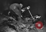 Image of Nazi atrocities in World War 2 Germany, 1945, second 39 stock footage video 65675072907