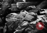 Image of Nazi atrocities in World War 2 Germany, 1945, second 62 stock footage video 65675072907