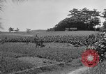 Image of Ryukyu Campaign Pacific Theater, 1945, second 53 stock footage video 65675072980