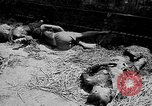 Image of Viet Minh prisoners French Indo China, 1949, second 60 stock footage video 65675073084
