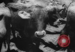 Image of shipment of livestock United States USA, 1945, second 13 stock footage video 65675073173