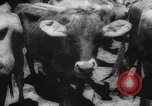 Image of shipment of livestock United States USA, 1945, second 14 stock footage video 65675073173