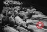 Image of shipment of livestock United States USA, 1945, second 17 stock footage video 65675073173