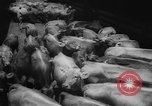 Image of shipment of livestock United States USA, 1945, second 18 stock footage video 65675073173