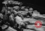 Image of shipment of livestock United States USA, 1945, second 19 stock footage video 65675073173