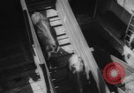 Image of shipment of livestock United States USA, 1945, second 45 stock footage video 65675073173