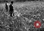 Image of Cocker Spaniels Verbank New York USA, 1935, second 28 stock footage video 65675073363