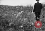 Image of Cocker Spaniels Verbank New York USA, 1935, second 34 stock footage video 65675073363