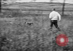 Image of English Springer Spaniels Verbank New York USA, 1935, second 31 stock footage video 65675073365