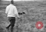 Image of English Springer Spaniels Verbank New York USA, 1935, second 42 stock footage video 65675073365