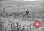 Image of English Springer Spaniels Verbank New York USA, 1935, second 56 stock footage video 65675073365