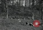 Image of German civilians on east bank of Mulde River Grimma Germany, 1945, second 12 stock footage video 65675073903