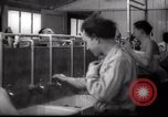 Image of Jewish people Netherlands, 1938, second 41 stock footage video 65675073949