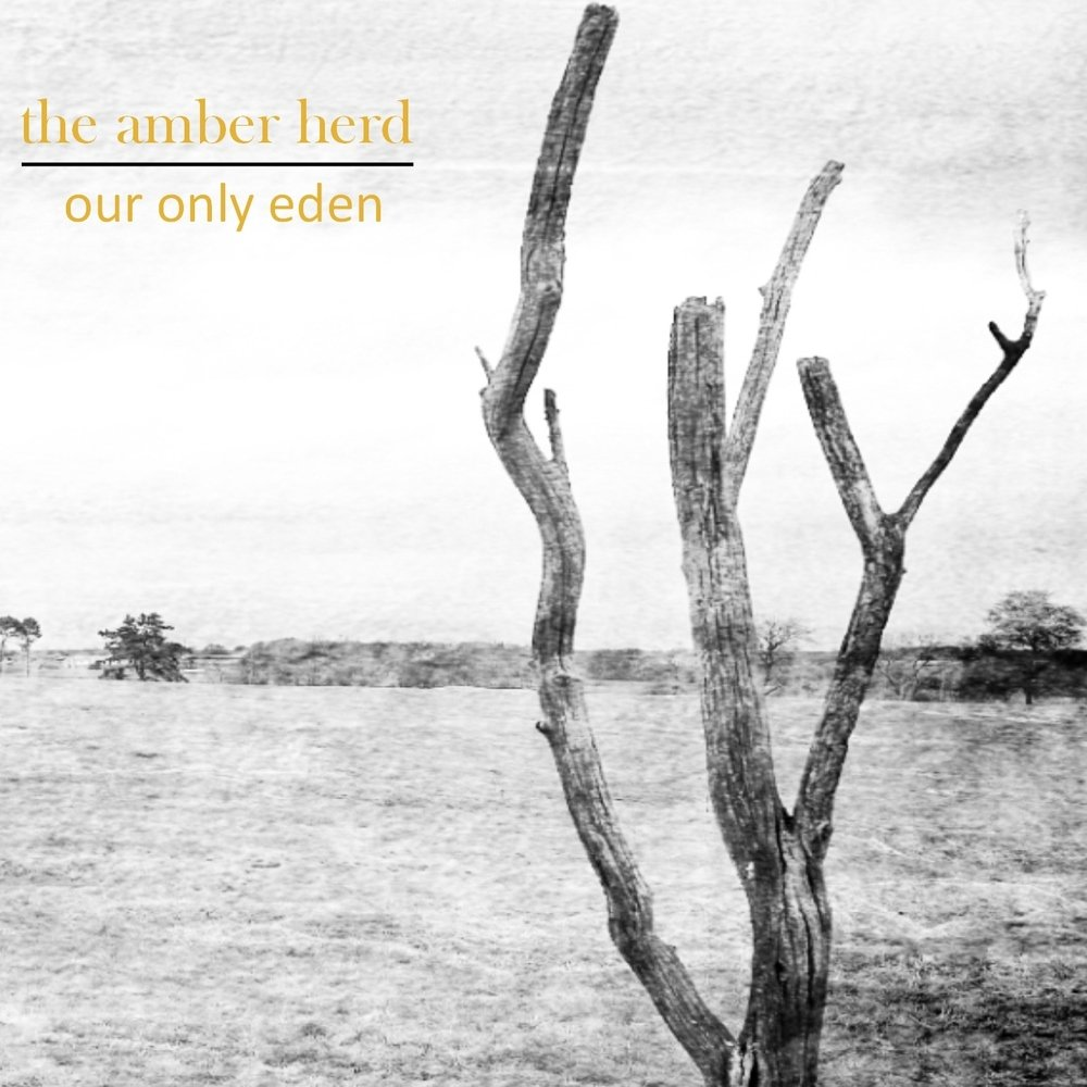The amber herd   our only eden cover