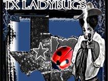 TX Ladybugs