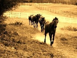 """Runaway Rodeo"" with Mark Daniel"