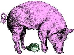 Image for Pigtoad