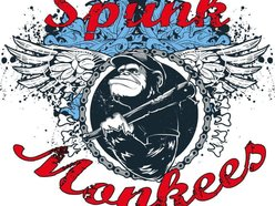 Image for Spunk Monkees