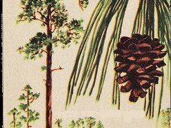Image for The Georgia Pines