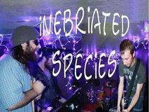 inebriated species